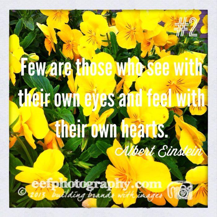 100 days of flowers persoonlijk iphone fotografie project instagram
