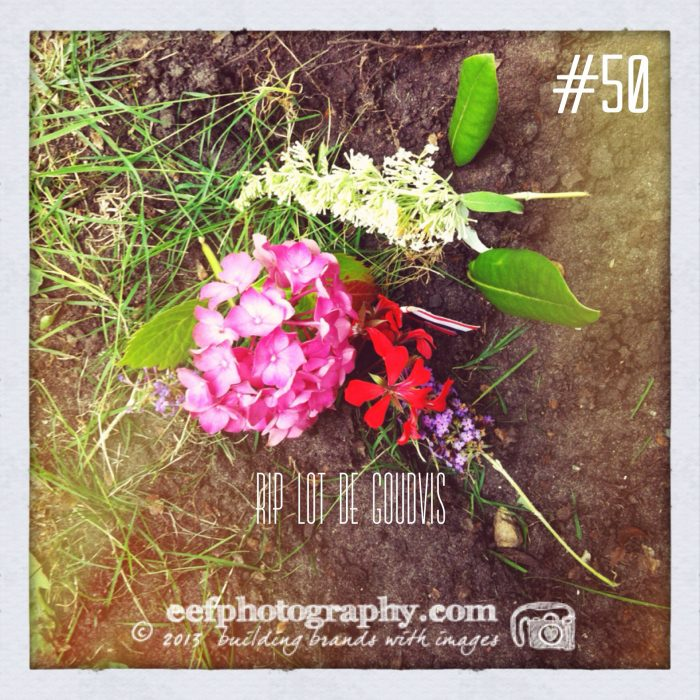100 days of flowers, iPhone fotografie