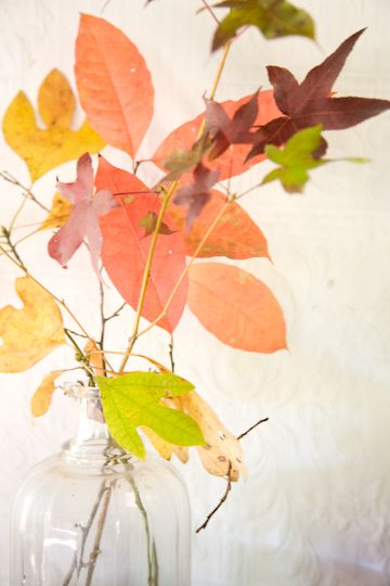 eefphotography | Blog | #herfst #fall