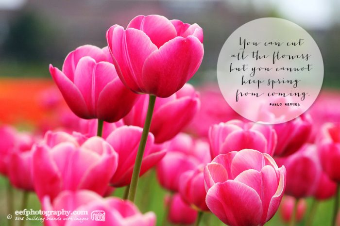 Fine Quotes About Cutting Flowers Photos - Valentine Ideas ...