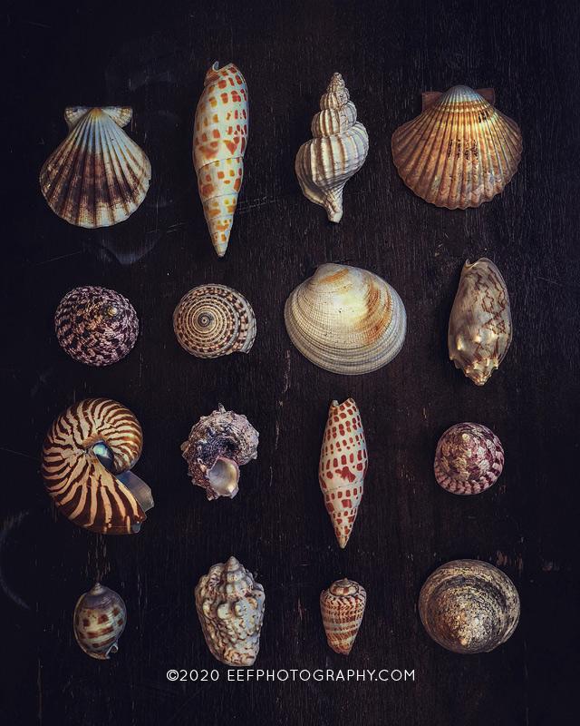 shell flatlay